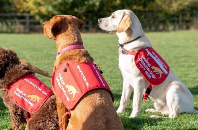 تجارب ثورية على كلاب لمكافحة أحد أخطر أمراض العالم