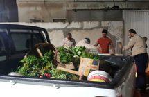 بلدية تاروت: زيارة 345 محلا غذائيا و نقل 2520 م3 نفايات خلال الثلاثة أشهر الماضية