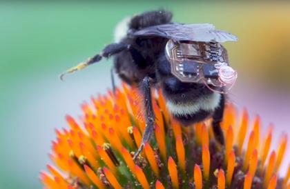 علماء يطورون أجهزة تعقب صغيرة تركب على النحل