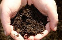 """دراسة حديثة تكشف تناول """"الطين"""" يساعد على فقدان الوزن"""