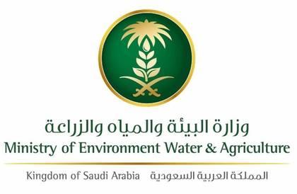«البيئة» تحظر مؤقتاً استيراد البصل المصري بسبب تلوثه بمتبقيات المبيدات