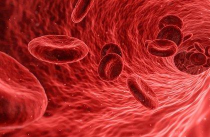 اكتشاف نوع غير معروف من الأوعية الدموية في العظام البشرية