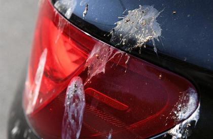 """""""أضرارها بالغة"""".. خبراء السيارات يحذرون من الاستهانة بفضلات الطيور"""