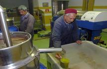 أوروبا تعرقل صادرات زيت الزيتون التونسي