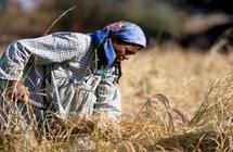 استبعاد الأرز من البطاقات التموينية في مصر