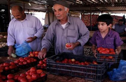 مزارعو الطماطم في ليبيا يرمون إنتاجهم في الصحراء
