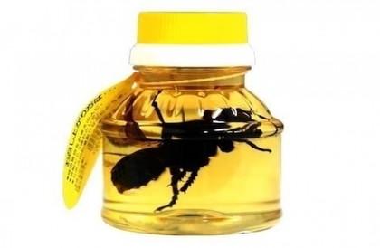 «دبابير ميتة» داخل العسل.. منتج غذائي جديد مثير للجدل«دبابير ميتة» داخل العسل.. منتج غذائي جديد مثير للجدل