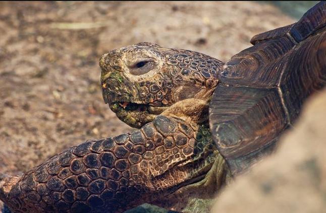 في الصين.. نفوق واحدة من أندر السلاحف حول العالم!