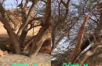 """بالفيديو: """"البيئة"""" توقف العمل في مشروع تشييد سد بـ""""حوطة بني تميم"""".. وناشط بيئي يكشف سر الشجرتين المعمرتين"""