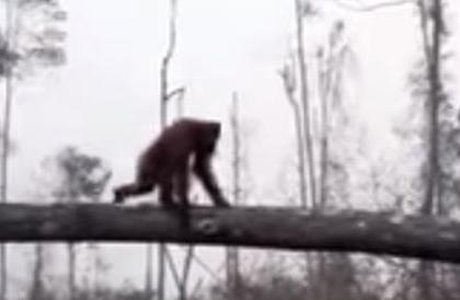 """مشهد مؤثر.. """"إنسان الغاب"""" يصارع جرافة دفاعاً عن بيته"""