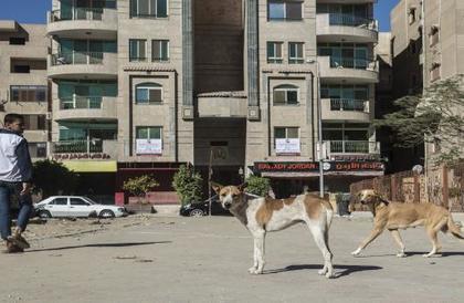 """مصر: تحذيرات من قتل كلاب الشوارع بحجة """"أنفلونزا الكلاب"""""""