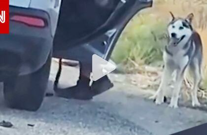 رد فعله يفطر القلب..شاهد كيف تصرف هذا الكلب بعدما هجره مالكه في الشارع