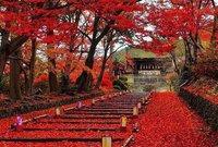 تعتبر من أعرق المدن في اليابان، احتضنت البلاط الإمبراطوري لأكثر من ألف عام