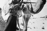 معركة كنزان : وقعت في 28 يونيو 1915 ضد قبائل العجمان في منطقة كنزان بالأحساء بعد تسببهم بنزاعات في الأحساء، وانتصر فيها الملك عبد العزيز وقام بترحيل القبائل بعيدًا عن الأحساء