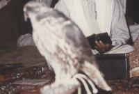 استغل الشيخ زايد الأزمات التي مرت بها بريطانيا عام 1967 وقرارها بالانسحاب من المستعمرات الخليجية خلال عدة سنوات فبدأ بالسعى وراء الاستقلال عن بريطانيا وتأسيس اتحاد خليجي في المنطقة
