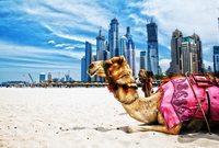 أصبحت الإمارات منذ تأسيسها أحد أهم الدول في المنطقة العربية والشرق الأوسط ولعبت العديد من الأدوار المهمة في الأحداث التي عاصرتها