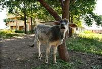 الكارثة طالت أيضا الحيوانات حيث مات أكثر من 2000 حيوان نتيجة تأثير الغاز وتم التخلص منهم جميعا في النهر القريب من مكان الحادث