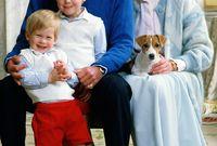 أًصبح الثنائي الملكي من أشهر ثنائيات العالم في تلك الفترة وأنجبا ابنيهما ويليام عام 1982 وهنري عام 1984