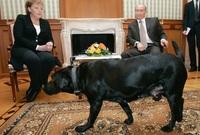ميركل لديها خوف من الكلاب بعد تعرضها لهجوم من قبل كلب في عام 1995 وخلال مؤتمر صحفي عقد عام 2007 جلب الرئيس الروسي فلاديمير بوتين كلبه خلال المؤتمر وأدعى بوتين أنه لم يقصد إخافتها